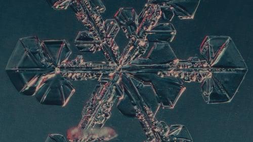 Avidly_impact_snowflake
